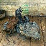 Restos recuperados del subsuelo en Ichmul (fulguritas)