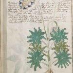 Sección del manuscrito de Voynich