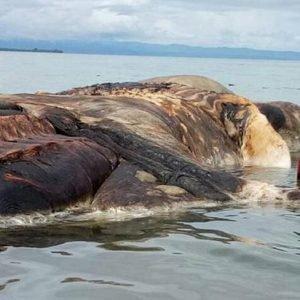 Los restos de lo que parecía un Calamar Gigante de 15 metros se hacen virales