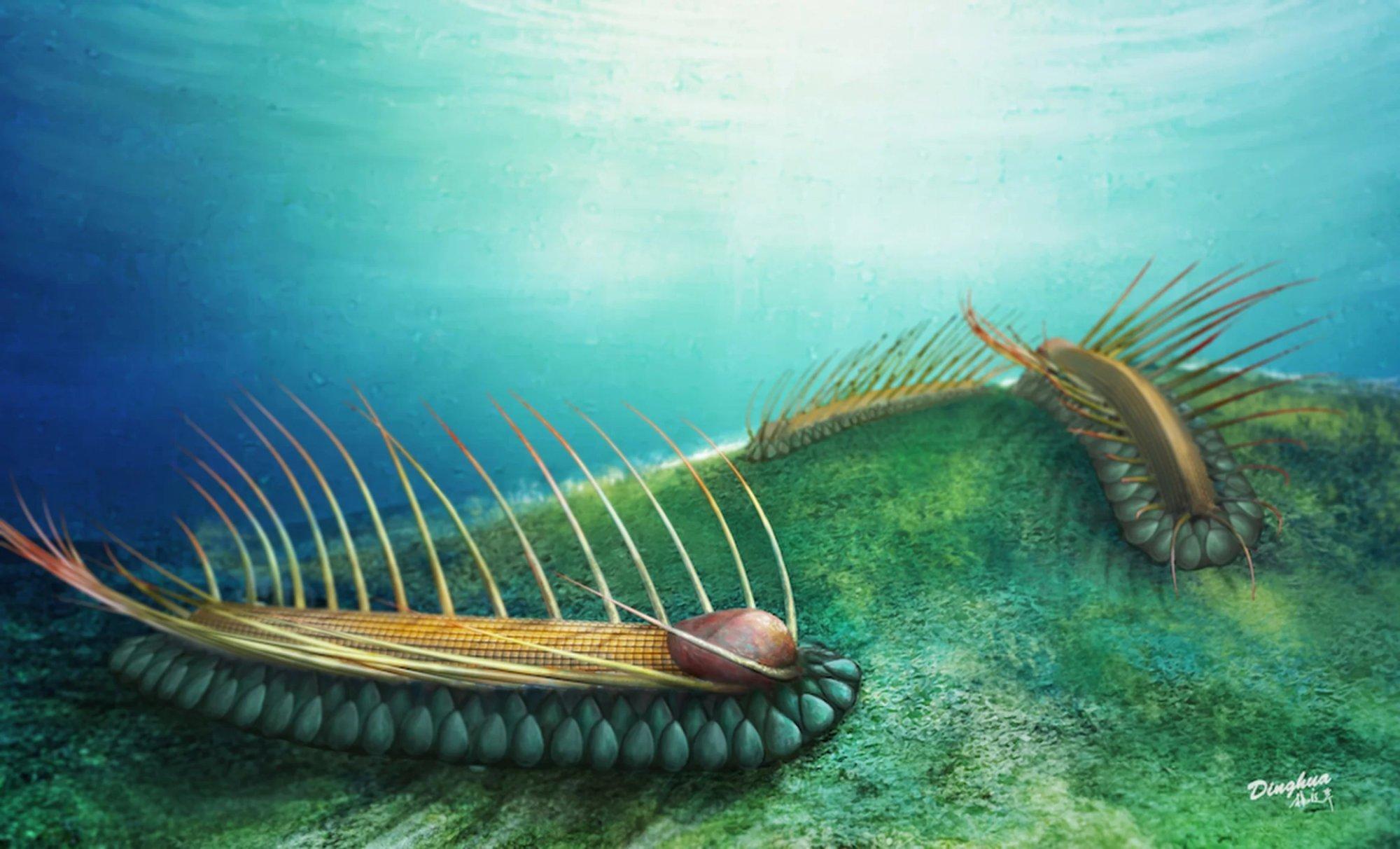 Orthrozanclus elongata, un nuevo animal prehistórico con armadura y espinas 3