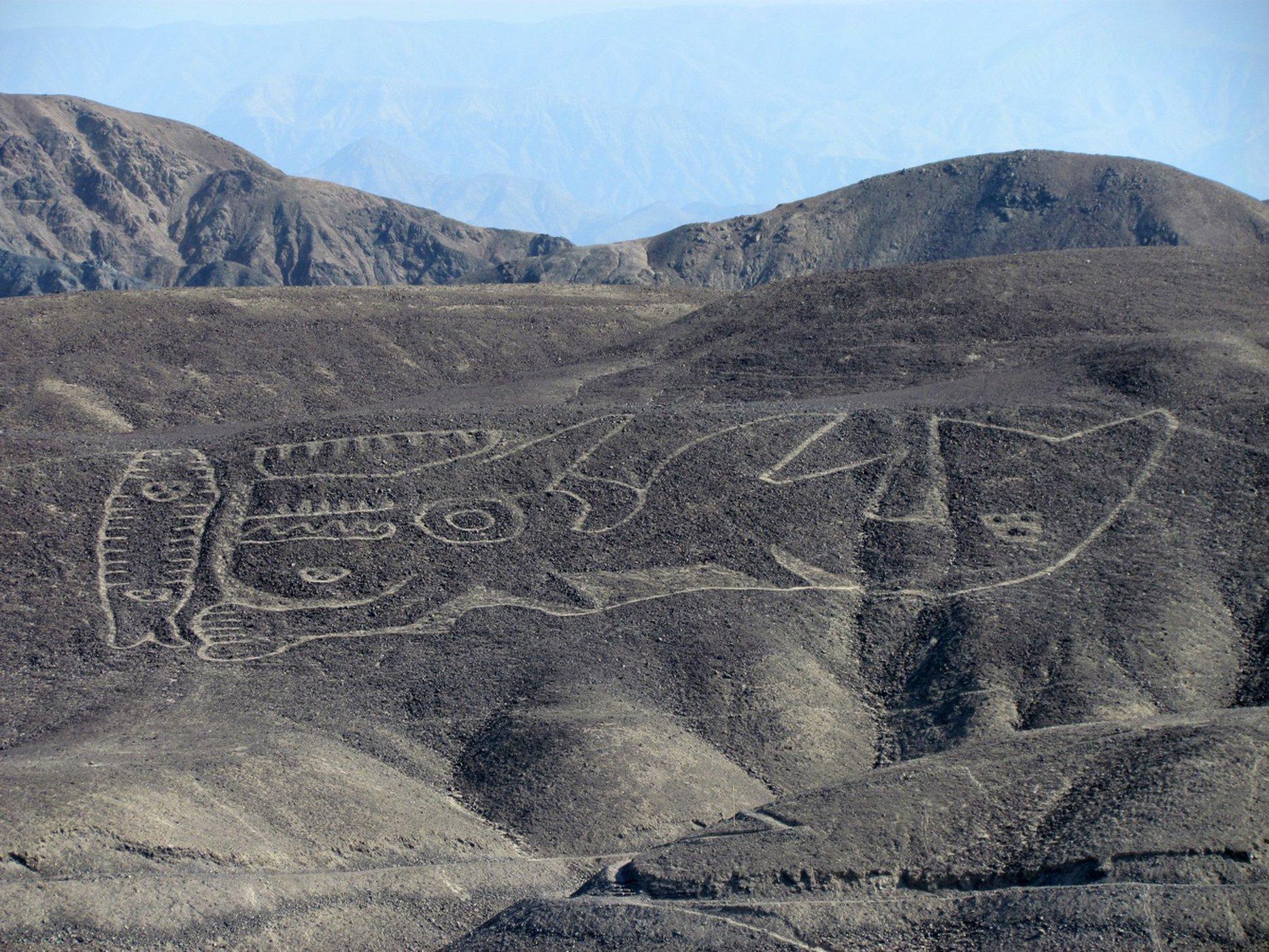 Reencuentran el geoglifo de una Orca en el desierto de Perú