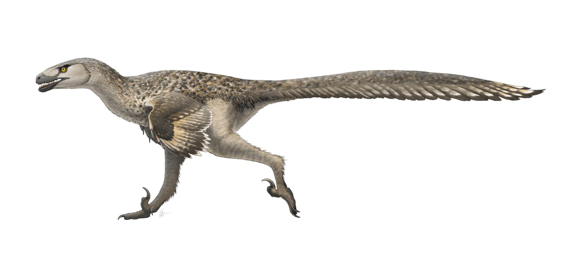 1920px Dromaeosaurus Restoration, Planeta Incógnito