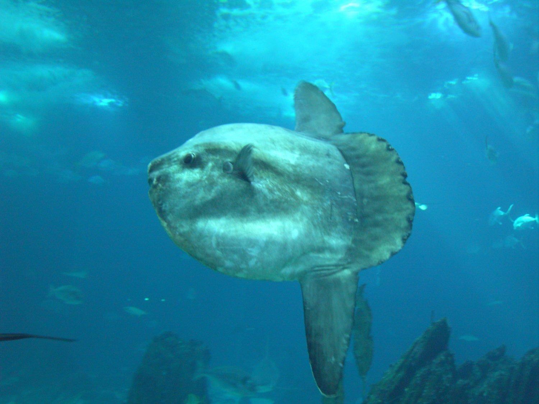 Mola Mola Lisboa 20051020 E1512669813715, Planeta Incógnito