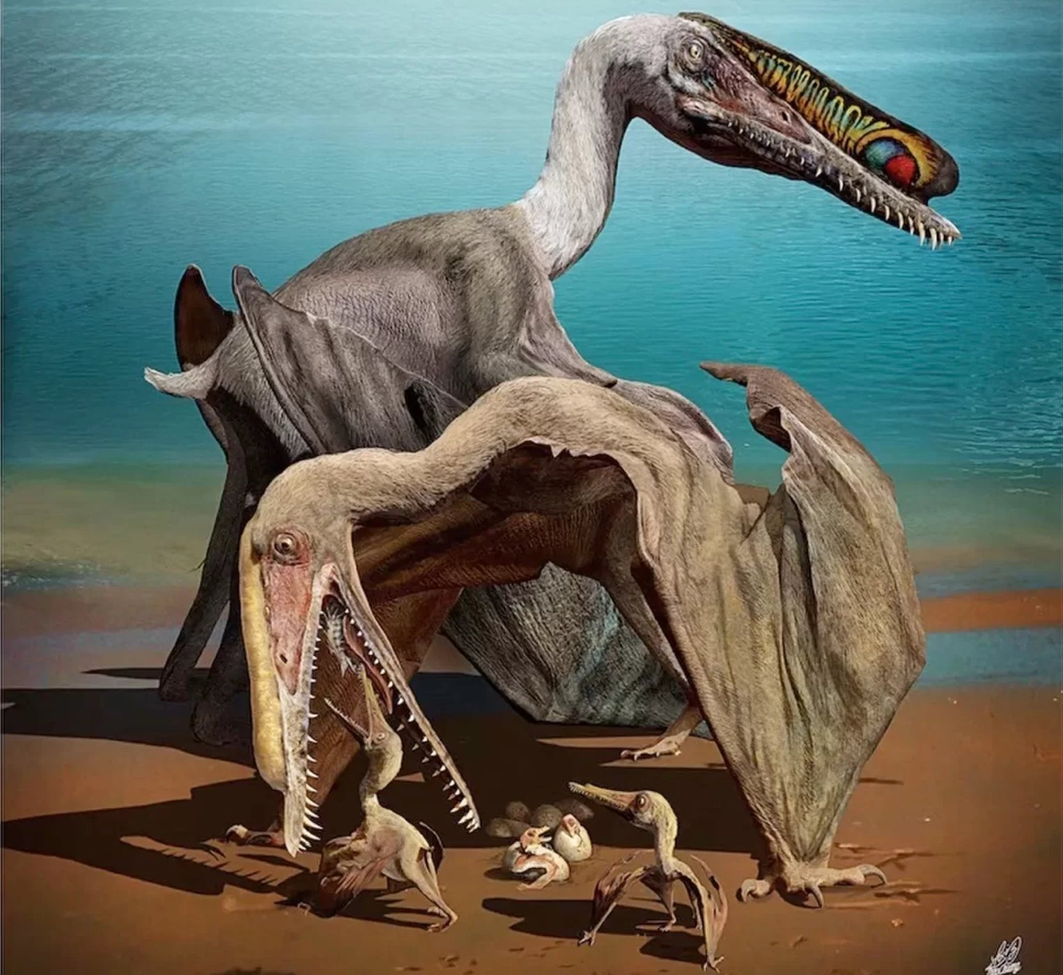 The young of the pterosaur Hamipterus tianshanensis likely couldn't fly at birth. Credit: Zhao Chuang