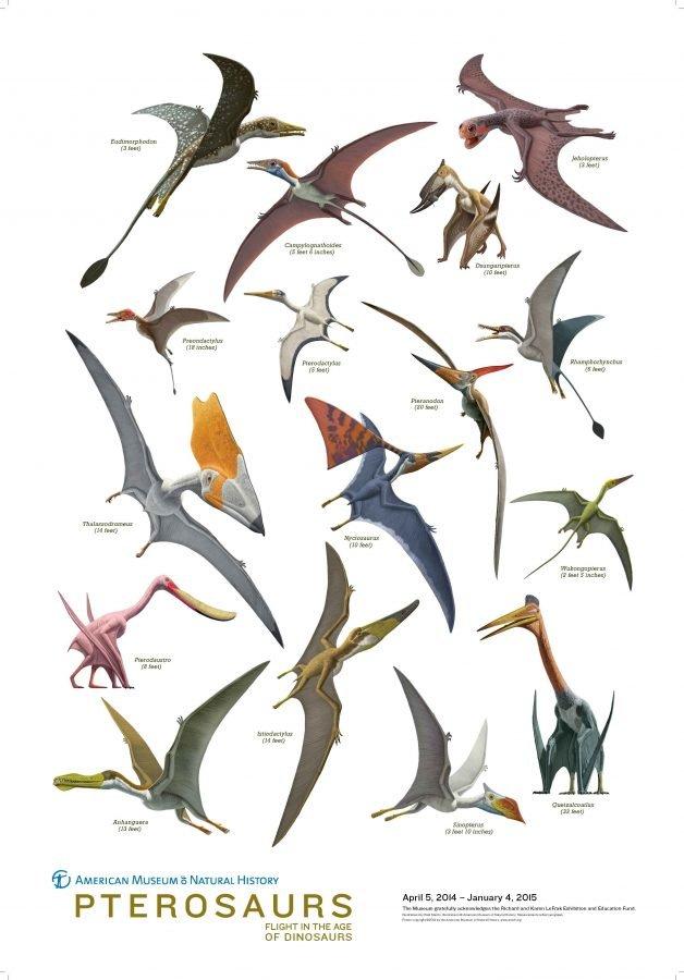 Pterosaurios 628x900, Planeta Incógnito