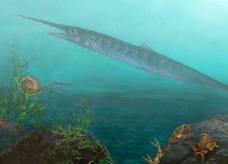 La especie recién descubierta, llamada Candelarhynchus padillai, habitó las aguas de lo que hoy es Colombia hace unos 90 millones de años. (Imagen: Oksana Vernygora)