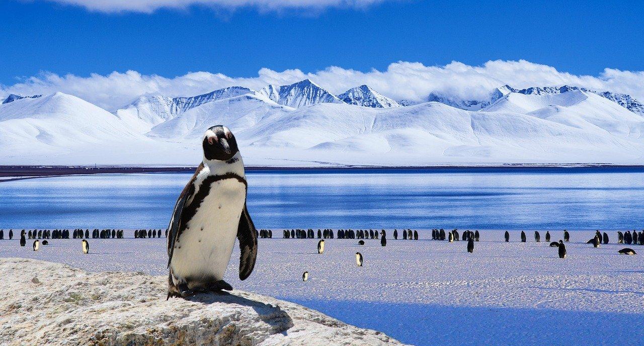 Antartida 1518369189, Planeta Incógnito