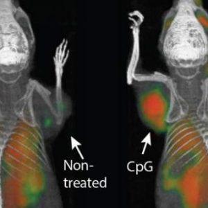 Una inyección parece eliminar todo rastro de tumores, de momento en ratones