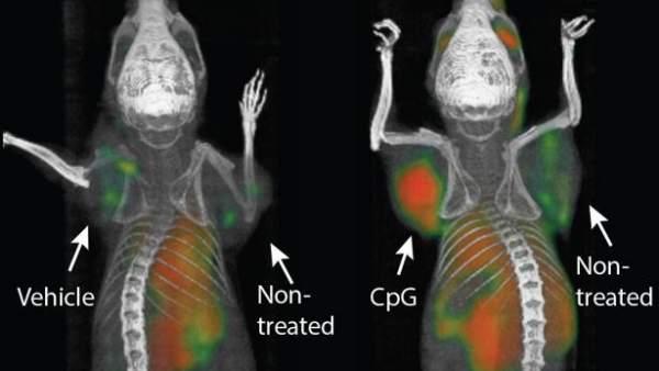 Una inyección parece eliminar todo rastro de tumores, de momento en ratones 6