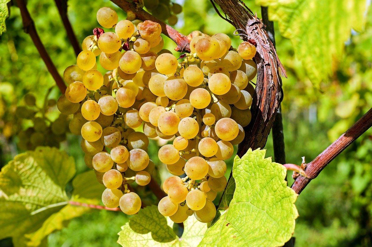 Las implicaciones Socieconómicas del vino del Monte Kronio ¡de hace casi 6000 años! 1
