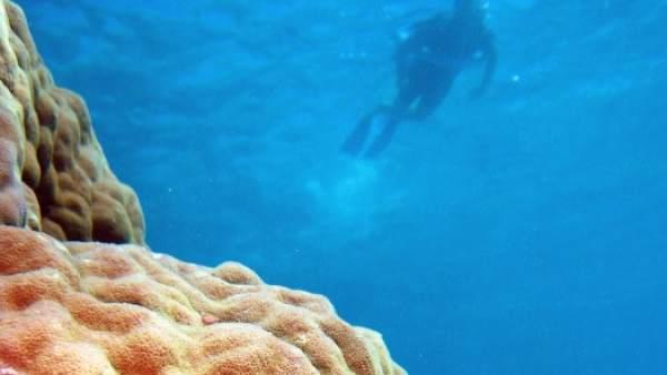"""Desarrollan un """"escudo solar"""" que puede ayudar ante el problema del blanqueo de corales"""