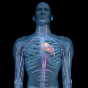 """Descubierto el """"líquido intersticial"""" del cuerpo humano, que explicaría la propagación del cáncer o las arrugas"""