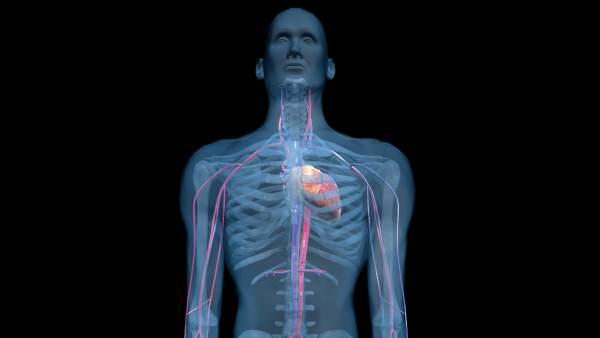 Descubierto El Liquido Intersticial Del Cuerpo Humano Que Explicaria La Propagacion Del Cancer O Las Arrugas, Planeta Incógnito