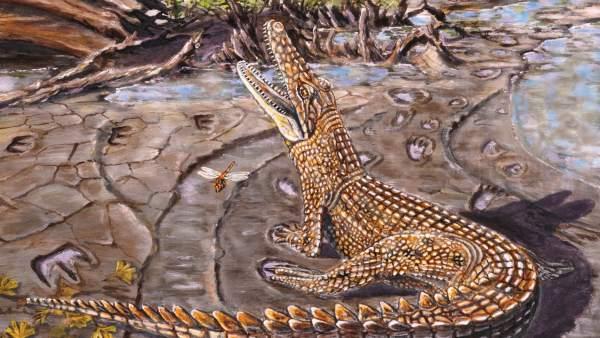 Descubren Donde Vivian Los Cocodrilos Prehistoricos Australianos, Planeta Incógnito