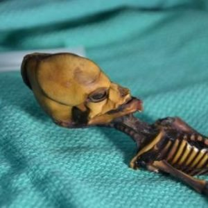 El 'esqueleto de Atacama' es de una bebé con raras mutaciones, no de un alien