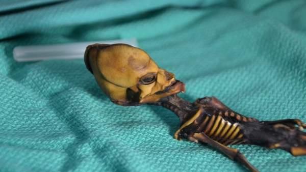 Esqueleto de Atacama