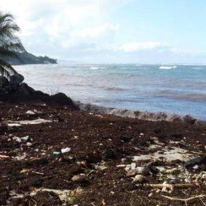 La marea marrón que inquieta en las Antillas