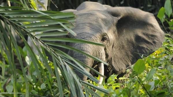 Los Excrementos De Elefante Son Excelentes Para Fabricar Papel, Planeta Incógnito