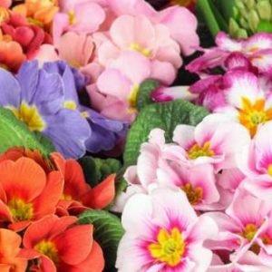 Primer día de la primavera de 2018: ¿a qué hora se produce el equinoccio de primavera?