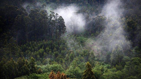Trivial Cuanto Sabes De Bosques, Planeta Incógnito