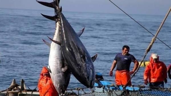 Comer pescado ayuda a disminuir la emisión de gases de efecto invernadero