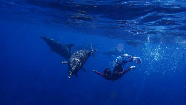 Demuestran por qué los mamíferos marinos no sufren el mal del buceador