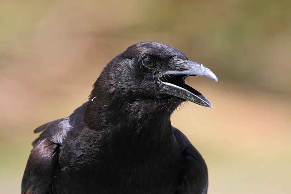 El color del plumaje de las aves determina en qué zonas pueden habitar 1
