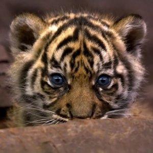 El daño que las películas, las redes sociales y otros factores hacen a los animales más populares del mundo