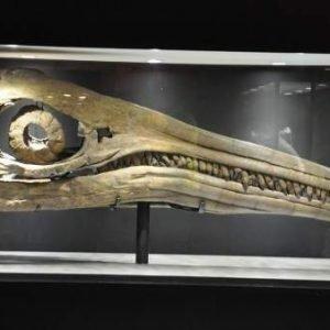 Identificado uno de los animales más grandes de la historia