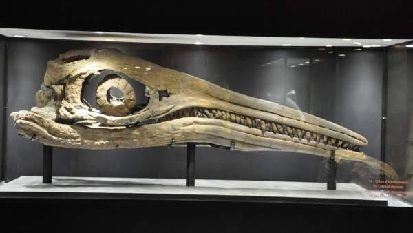 Identificado Uno De Los Animales Mas Grandes De La Historia, Planeta Incógnito