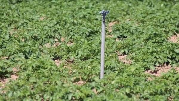 La 'sequía escondida' por abusar del riego con energía solar