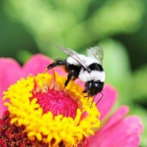 Las plantas tienen que hacer vida social para conservar la biodiversidad
