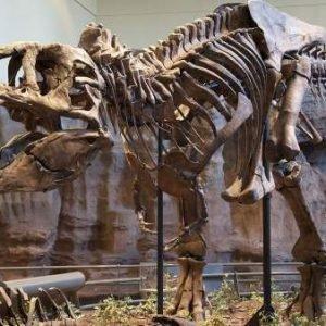 Los dinosaurios carnívoros se repartían las presas según su especie