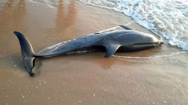 Alertan de la sobrepesca del Mediterráneo como causa del encallamiento de los cetáceos