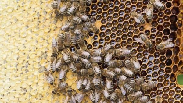 Un panal de abejas