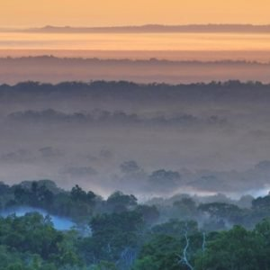 Deforestación y tráfico ilegal de especies, los grandes peligros para la biodiversidad de Guatemala