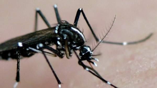 El Mosquito Tigre Se Expande Por Espana, Planeta Incógnito