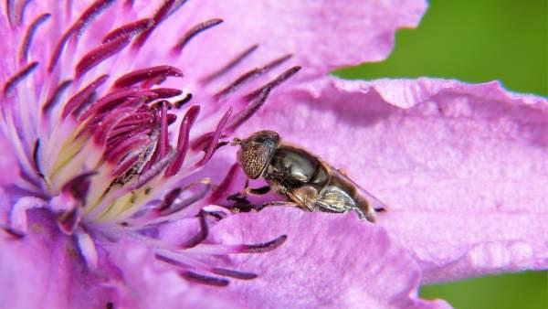 Investigan pesticidas en el polen y néctar