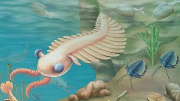 Reconstrucción de algunas especies que vivieron durante el periódo Cámbrico