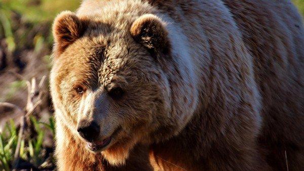 Estas Son Las 9 Especies En Peligro De Extincion En Espana 2, Planeta Incógnito