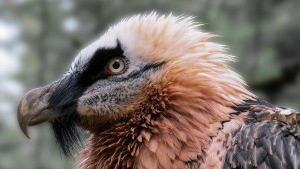 Estas Son Las 9 Especies En Peligro De Extincion En Espana 4, Planeta Incógnito