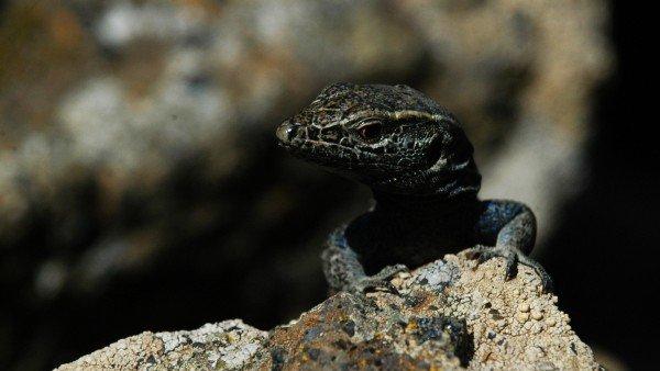 Estas Son Las 9 Especies En Peligro De Extincion En Espana 6, Planeta Incógnito