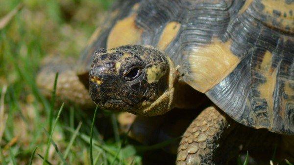 Estas son las 9 especies en peligro de extinción en España 8