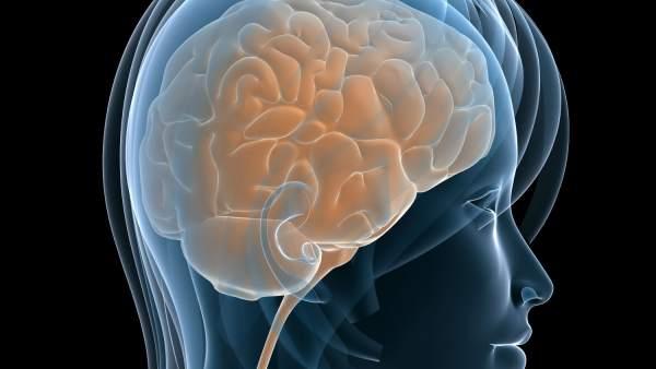 Cada Persona Tiene Una Anatomia Cerebral Unica Como Las Huellas Dactilares, Planeta Incógnito
