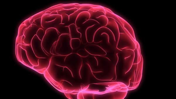 Descubren la parte del cerebro clave en las respuestas activas a las percepciones visuales