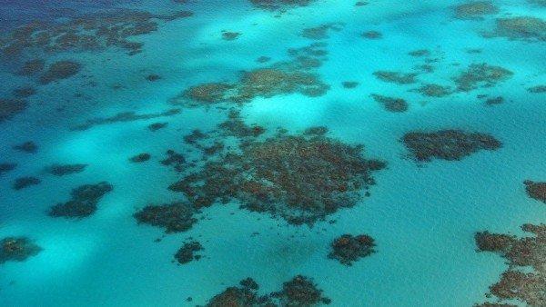 Las Heces De Las Aves Por Tanto Tambien La Eliminacion De Roedores Beneficia A Los Arrecifes De Coral, Planeta Incógnito