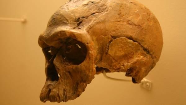 Los Humanos No Evolucionaron Desde Una Sola Region En Africa Sino En Poblaciones Dispersas Y Aisladas, Planeta Incógnito