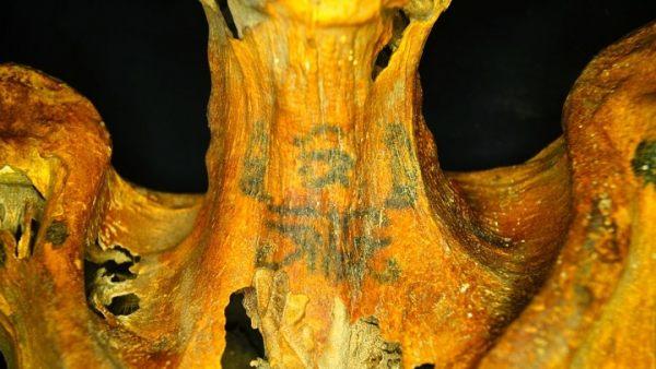 Momia cubierta de tatuajes