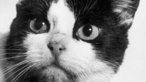 Felicette El Primer Y Unico Gato Que Ha Sobrevivido En El Espacio, Planeta Incógnito