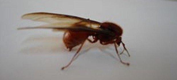 Si El Aire Se Esta Llenado De Hormigas Voladoras Pero Tiene Explicacion, Planeta Incógnito